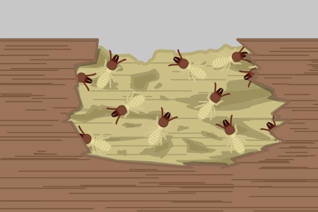 シロアリの巣 木材