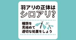 羽アリが大量発生!4つの原因と駆除や予防の方法を解説します