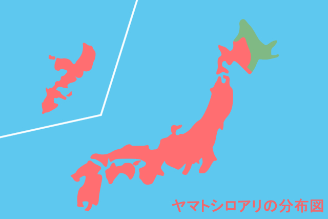 ヤマトシロアリの生息地