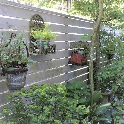 庭木植木などの樹木
