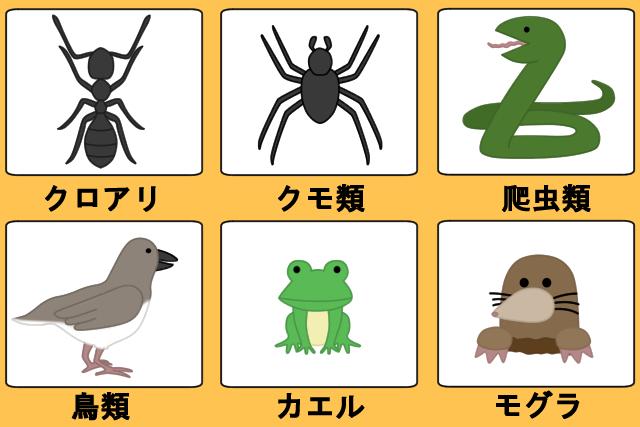 身近にいる天敵6種