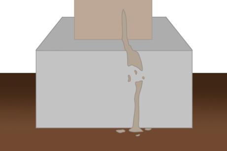 クロアリの蟻道